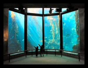 This is the tank where a scuba diver with a mic feeds the fish and talks to everyone on the outside of the tank.